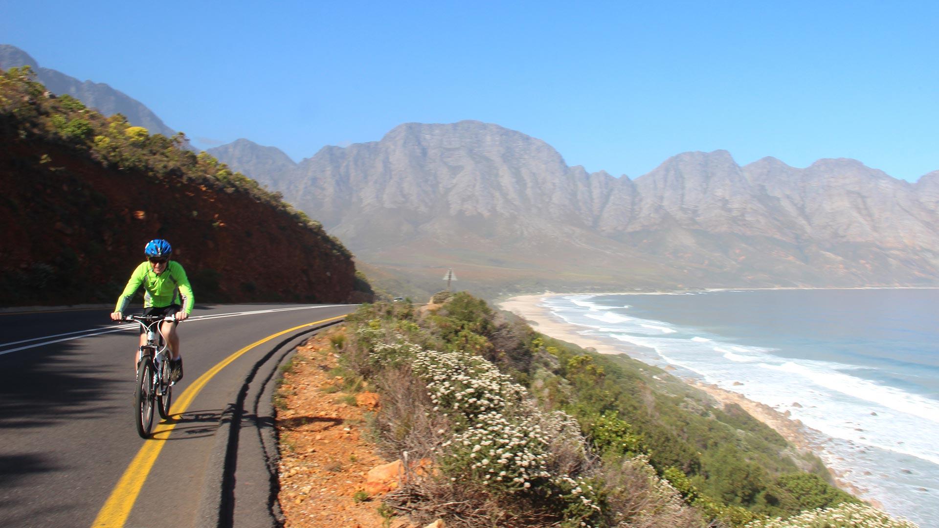 whale coast road tour